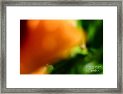 Orange And Green  Framed Print by Bobby Mandal