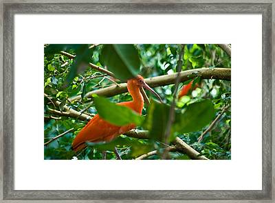 Orange And Green Wil 279 Framed Print