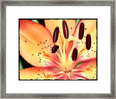 Orange And Pink Flower Framed Print