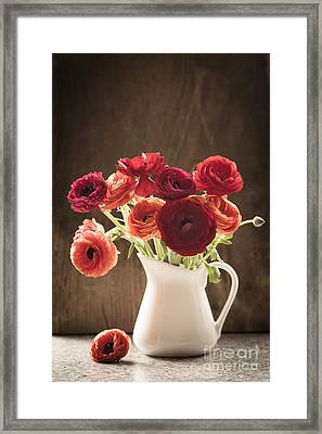 Orange And Red Ranunculus Flowers Framed Print by Jan Bickerton