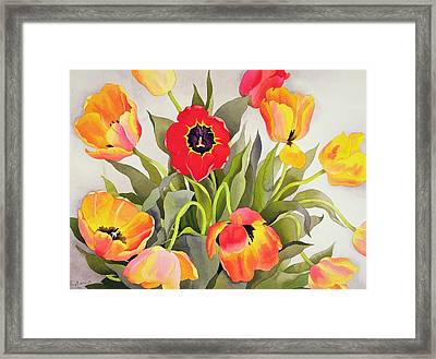 Orange And Red Tulips  Framed Print by Christopher Ryland