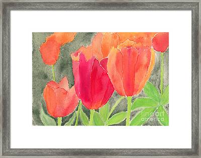 Orange And Red Tulips Framed Print