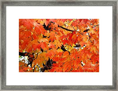 Orange And Reds And Some Yellow Too Framed Print by Eunice Miller