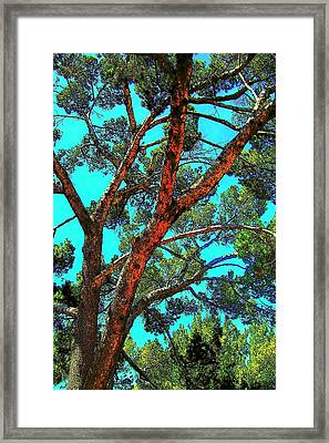 Framed Print featuring the photograph Orange And Turquoise  by Jodie Marie Anne Richardson Traugott          aka jm-ART