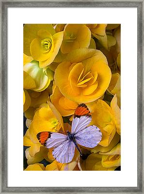 Orange And White Butterfly Framed Print by Garry Gay