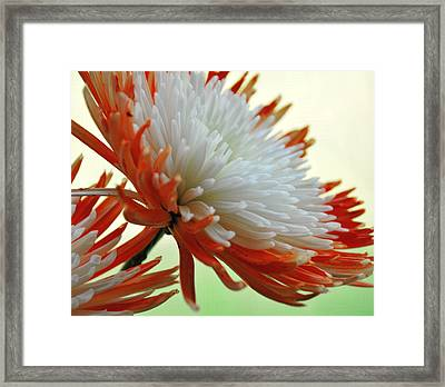 Orange And White Flower Framed Print