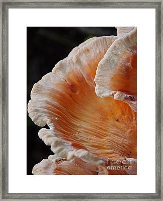 Orange And White Fungi Framed Print