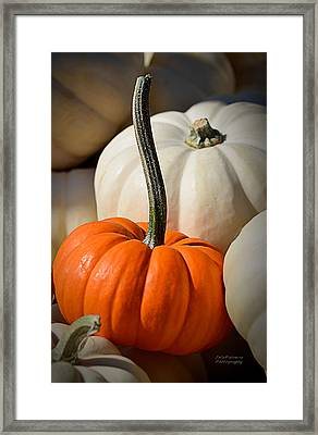 Orange And White Pumpkins Framed Print