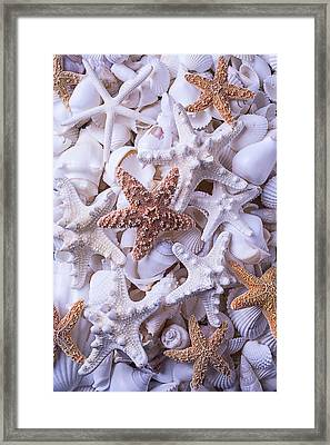 Orange And White Starfish Framed Print by Garry Gay