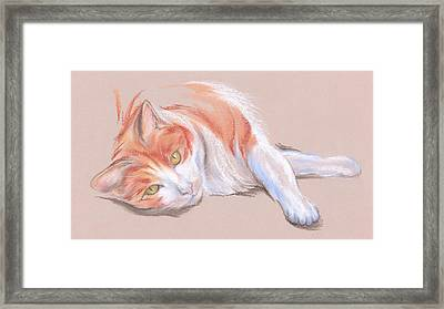 Orange And White Tabby Cat With Gold Eyes Framed Print by MM Anderson