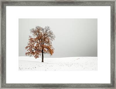 Orange And White Framed Print