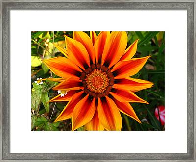 Orange And Yellow Flower Framed Print by Fabian Cardon