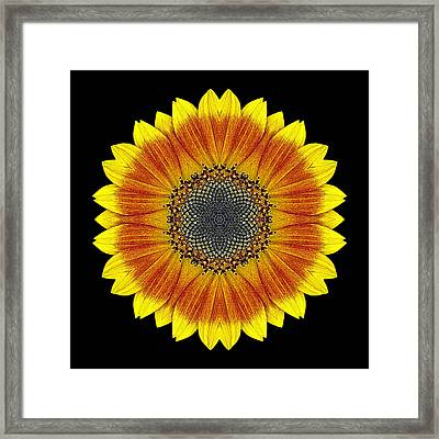 Framed Print featuring the photograph Orange And Yellow Sunflower Flower Mandala by David J Bookbinder