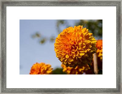 Orange Framed Print by Andreas Levi