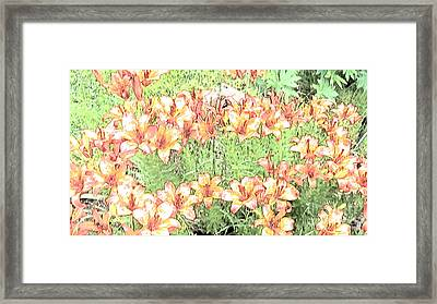 Orange Asiatic Lilies Framed Print by Beverly Guilliams