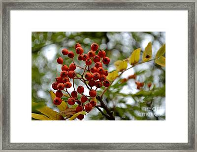 Framed Print featuring the photograph Orange Autumn Berries by Scott Lyons