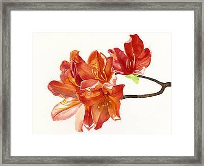 Orange Azaleas Framed Print by Sharon Freeman