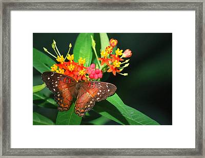 Framed Print featuring the photograph Orange Beauty by Amee Cave