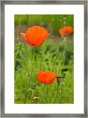 Orange Beauty Framed Print by Gail Maloney