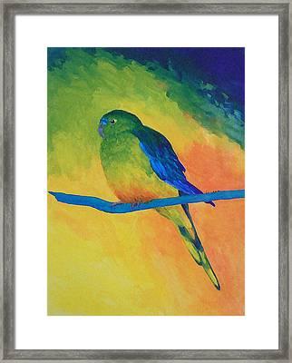 Orange-bellied Parrot Framed Print by Margaret Saheed