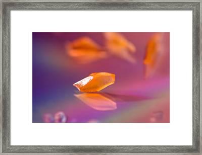 Orange Bit Framed Print by Lisa Knechtel