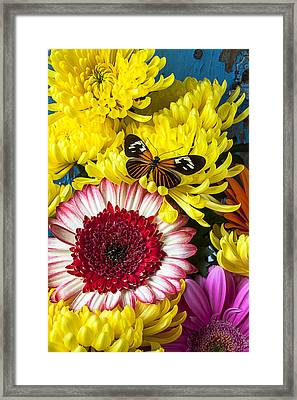 Orange Black Butterfly With Red Mum Framed Print by Garry Gay
