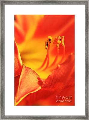 Orange Blooming Framed Print