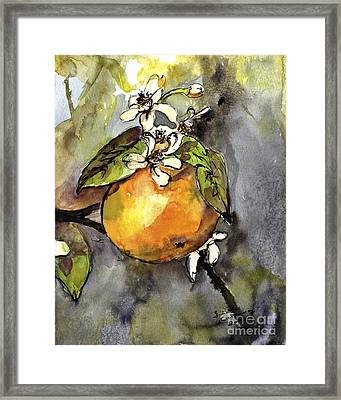 Orange Blossom Botanical Watercolor And Ink By Ginette Framed Print