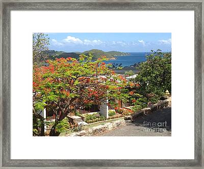Orange Blossom Framed Print by Candace Bailey