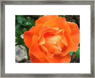 Framed Print featuring the photograph Orange Blossom Special by Brooks Garten Hauschild