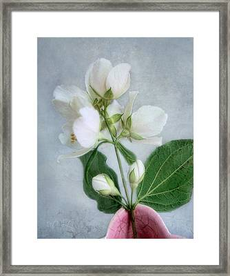 Framed Print featuring the photograph Orange Blossom Time by Louise Kumpf