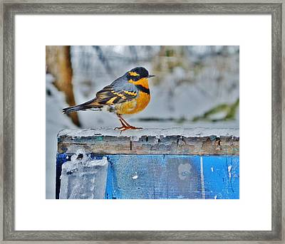 Orange Blue And Sleet Framed Print