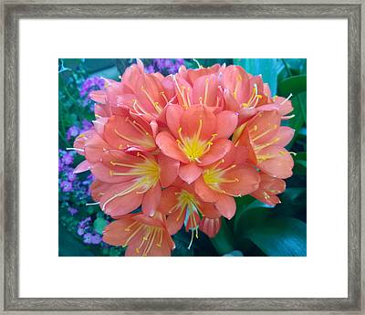 Orange Bouquet Framed Print by Claudia Goodell