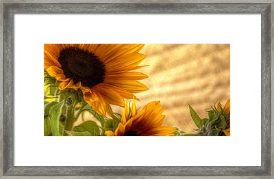 Orange Burst - Sunflower - Mike Hope Framed Print
