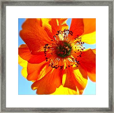 Orange Burst Framed Print by Tracy Male
