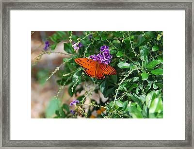 Orange Butterfly Framed Print by Aimee L Maher Photography and Art Visit ALMGallerydotcom