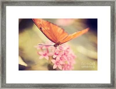 Orange Butterfly Framed Print by Erin Johnson