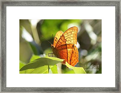 Orange Butterfly Framed Print by Jola Martysz