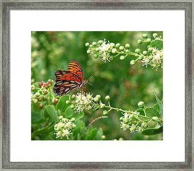Framed Print featuring the photograph Orange Butterfly by Marcia Socolik