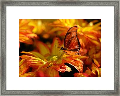 Orange Butterfly On Yellow Flowers Framed Print