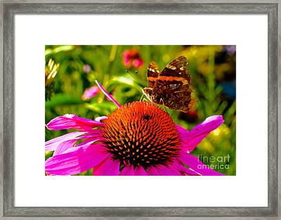 Orange Butterfly  Framed Print by Sarah Mullin