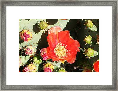 Framed Print featuring the photograph Orange Cactus Bloom by Dick Botkin