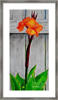 Orange Canna Lily Framed Print