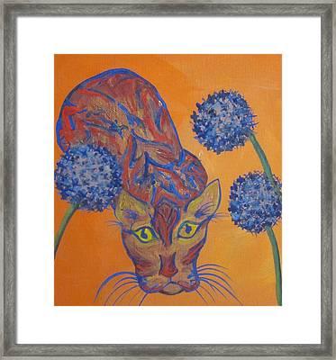 Orange Cat Framed Print by Cherie Sexsmith