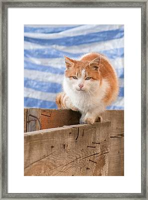 Orange Cat  Framed Print by Vlad Baciu