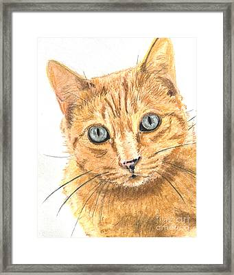 Orange Cat With Green Eyes Framed Print