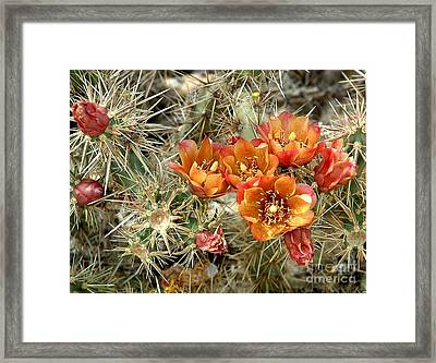 Orange Cholla Framed Print by Marilyn Smith
