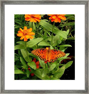 Orange Creatures Framed Print