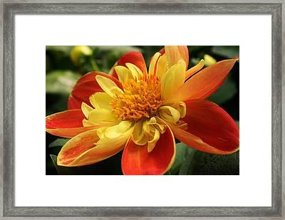 Orange Crush Framed Print by Bruce Bley