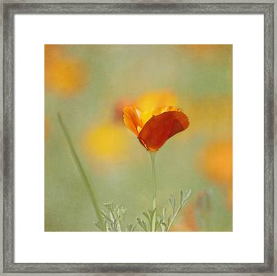Orange Crush - California Poppy Framed Print by Kim Hojnacki